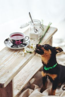 Free Puppy Bites The Flower Stock Images - 109904074