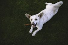 Free Dog On The Grass Royalty Free Stock Photography - 109904167