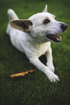 Free White Dog With Stick Stock Photo - 109904190