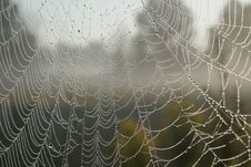 Free Close-up, Cobweb, Macro Stock Photo - 109904480