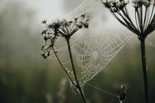 Free Shallow Focus Photography Of A Spiderweb With Raindrops Royalty Free Stock Photos - 109904658