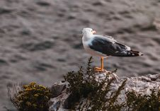 Free White And Grey Seagull On Rock Stock Photos - 109904683