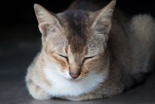 Free Close-Up Photo Of Brown Tabby Cat Royalty Free Stock Photography - 109904767