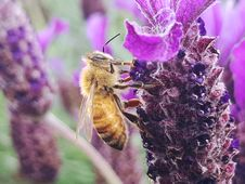 Free Bee, Bloom, Blossom Stock Images - 109905174
