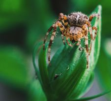 Free Arachnid, Close-up, Creepy Stock Photos - 109905363