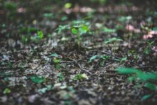 Free Young Plants On Litter Stock Photos - 109905773