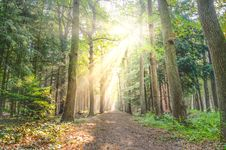 Free Landscape Photo Of Pathway Between Green Leaf Trees Royalty Free Stock Photography - 109905807