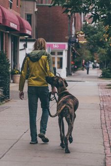 Free A Man Walking In The Street With His Dog Royalty Free Stock Image - 109905896