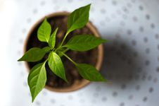 Free Selective Photography Of Green Leaf Plant In Brown Pot Royalty Free Stock Photos - 109905938