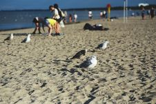 Free Seagulls On The Beach Royalty Free Stock Photography - 109906137