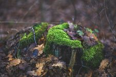 Free Moss Covered Tree Trunk Surrounded By Fallen Leaves Royalty Free Stock Photography - 109906397