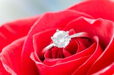 Free Macro Shot Of Solitaire Ring On Flower Royalty Free Stock Photography - 109906477