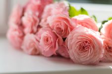 Free Selective Focus Photography Of Pink Peony Flowers Royalty Free Stock Photos - 109906528