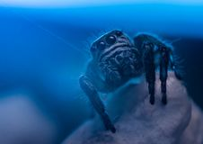 Free Aquarium, Blue, Creepy Stock Images - 109906584