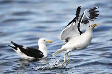Free Animal, Photography, Avian Stock Photography - 109906682