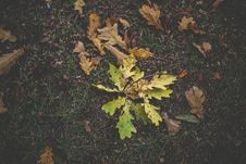 Free Dirty Autumn Leaves Royalty Free Stock Images - 109906699