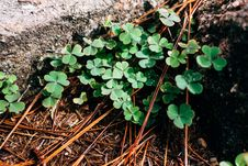 Free Close-up, Clover, Dewdrops Stock Photography - 109906702