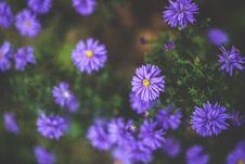 Free Purple Flowers Royalty Free Stock Photos - 109906708