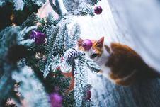Free Cat Under The Christmas Tree Stock Photos - 109906913