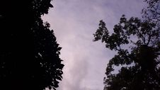 Free Low Angle Photography Of Silhouette Of Trees Under Calm Sky Royalty Free Stock Photo - 109906925