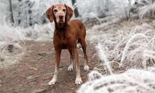 Free Depth Of Field Photography Of Brown Dog Near White Grasses Royalty Free Stock Image - 109906926