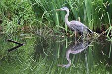Free White Crane Bird Stock Photos - 109906933