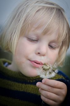 Free Selective Focus Photography Of Girl In Green And Black Striped Sweater Holding And Blowing Dandelion Royalty Free Stock Photo - 109907055