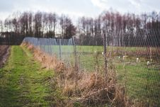 Free Mesh Fence On The Nature Stock Photos - 109907203