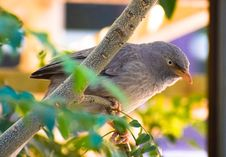 Free Gray Bird Perched On Tree Branch Stock Photo - 109907240
