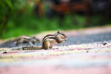 Free Close-up Photography Of A Squirrel Royalty Free Stock Photography - 109907457