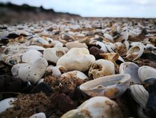 Free Seashell And White Stones On Seashore Stock Images - 109907554