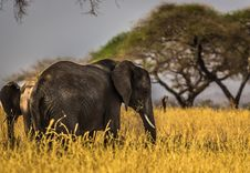 Free Black Elephant On Grass Field Stock Image - 109907571