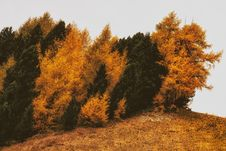 Free Brown And Green Withered Trees On Withered Grass Royalty Free Stock Images - 109907789