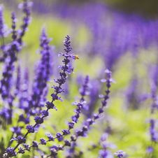 Free Selective Photo Of Purple Petaled Flower Stock Images - 109907804