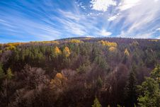 Free Aerial Shot Of Trees During Fall Season Under Blue Sky Royalty Free Stock Photo - 109907805