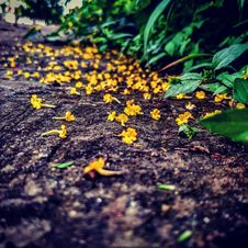 Free Yellow Flowers Royalty Free Stock Images - 109908149