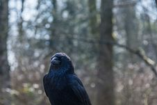 Free Black Bird Surrounded By Trees During Daytime Stock Photo - 109908150