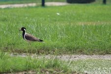 Free Brown And Black Bird On Grass Stock Photos - 109908183