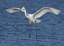 Free Close-up Photography Of A White Egret Royalty Free Stock Photo - 109908295