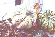 Free Two Green And Beige Pumpkins Stock Photo - 109908310