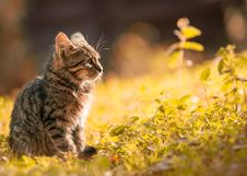 Free Tabby Kitten Sitting On The Grass Royalty Free Stock Photography - 109908387