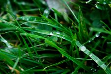 Free Macro Photography Of Blade Of Grass Royalty Free Stock Photo - 109908455