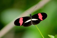 Free Black, Red, And White Butterfly In Closeup Photo Stock Image - 109908641