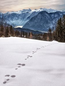 Free Animal Foot Prints On Snow Near Mountain At Daytime Stock Images - 109908664