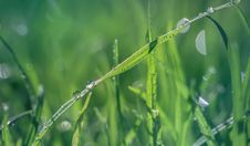Free Macro Shot Of Green Grass Stock Photo - 109908690
