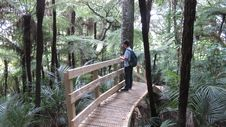 Free Person On Wooden Bridge Surrounded By Trees Royalty Free Stock Photography - 109908777