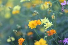 Free Selective Focus Photography Of Orange, Yellow, And Purple Flowers Royalty Free Stock Images - 109908929