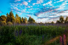 Free Tall Trees And Grasses Stock Photo - 109909110