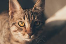 Free Portrait Of A Cat Royalty Free Stock Images - 109909119