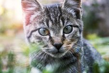 Free Close-Up Photography Of A Tabby Cat Stock Image - 109909131